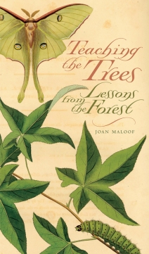 maloof_teachingtrees_pe